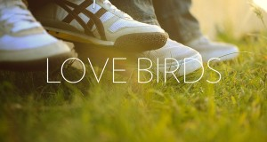 Love Birds : Image